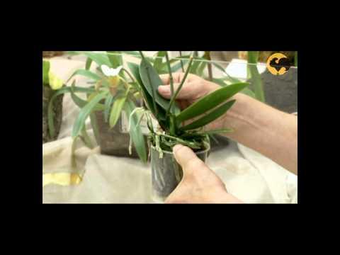 Сад и огород-106 Орхидеи: уход, полив, пересадка, освещение