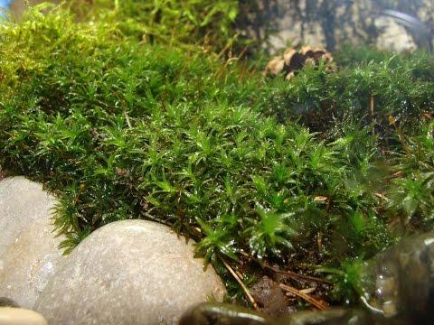 Вечный флорариум, замкнутая экосистема...канал SID tv