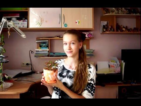 Комнатное растение - Фиттония. Мастерская Марии.