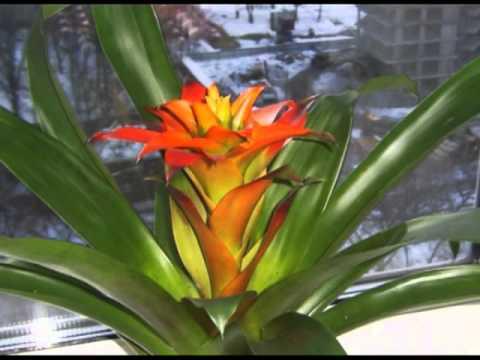 Эти растения поражают своими необычными цветами
