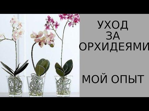 Как ухаживать за орхидеями. Мой опыт.