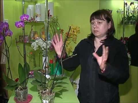 Как ухаживать за орхидеями.wmv