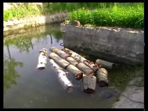 Выращивание грибов: вешенка и шиитаке на пнях. Разные варианты посадки.