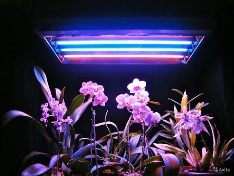 Фитолампы, для чего они нужны, сравнение растений с лампой и без