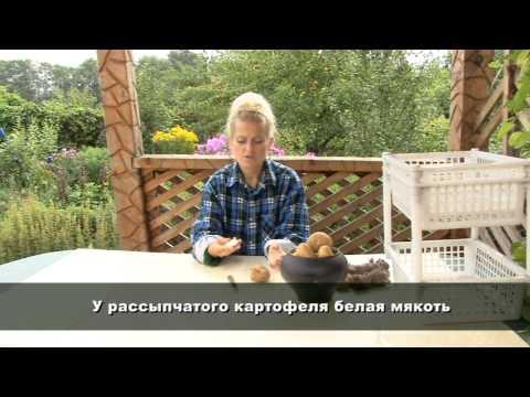 Все о выращивании картофеля. ТИПЫ И СОРТА КАРТОФЕЛЯ.Часть 1