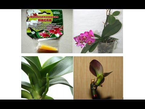 Цитокининовая Гормональная паста для Орхидей. Cтимулирование цветения и размножение Орхидей
