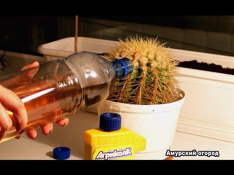 КАКТУС - удобрения и подкормка кактуса и суккулентов
