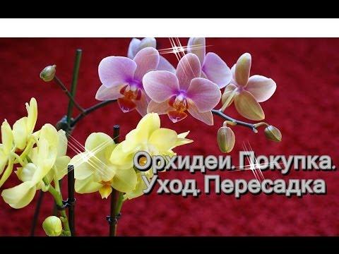 Орхидеи: Покупка Уход Пересадка
