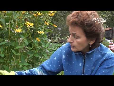"""Как выкапывать и хранить гладиолусы. . Сайт """"Садовый мир"""""""