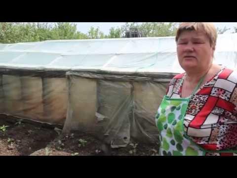 Секрет выращивания баклажанов. Часть II.