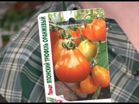 Сорта вкусных томатов