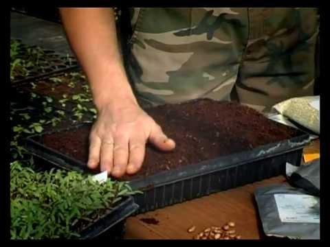 Сад и огород. Ошибки при посадке семян и рассады.