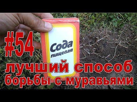 #54 САМЫЙ ЛУЧШИЙ И ПРОСТОЙ СПОСОБ БОРЬБЫ С МУРАВЬЯМИ!!! Как избавиться от муравьев!