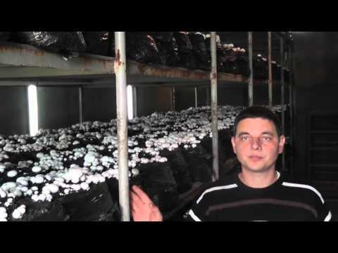 Как заработать на грибах в домашних условиях в промышленных масштабах.1-я часть.
