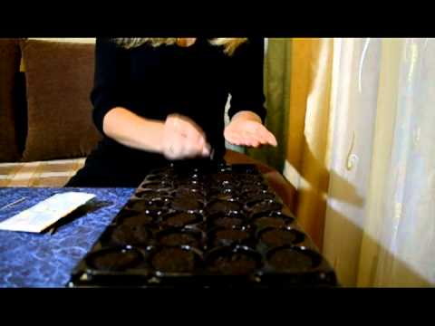 Руководство по использованию торфяных таблеток и кассет для рассады