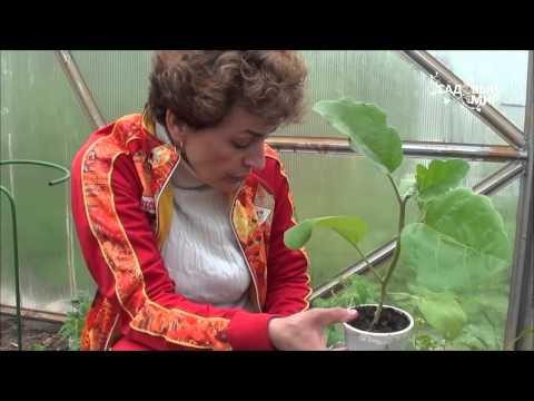 """Как выбирать сорта томатов. Сайт """"Садовый мир"""""""