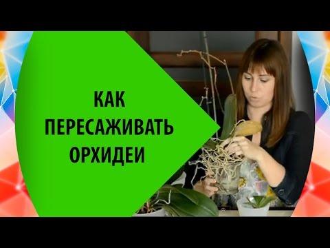 Пересадка Орхидея Фаленопсис 🌸 Как Пересаживать Орхидеи