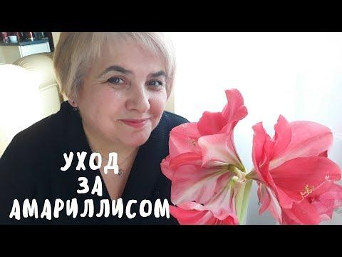 Правильный уход за амариллисом. Мои цветы. Мой опыт.