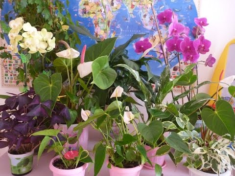 Комнатные цветы которые отчищают воздух