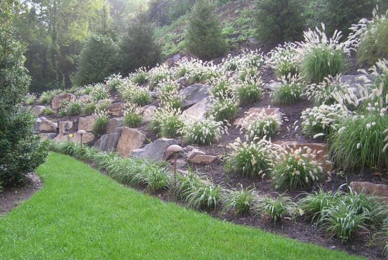 цветы для альпийской горки фото