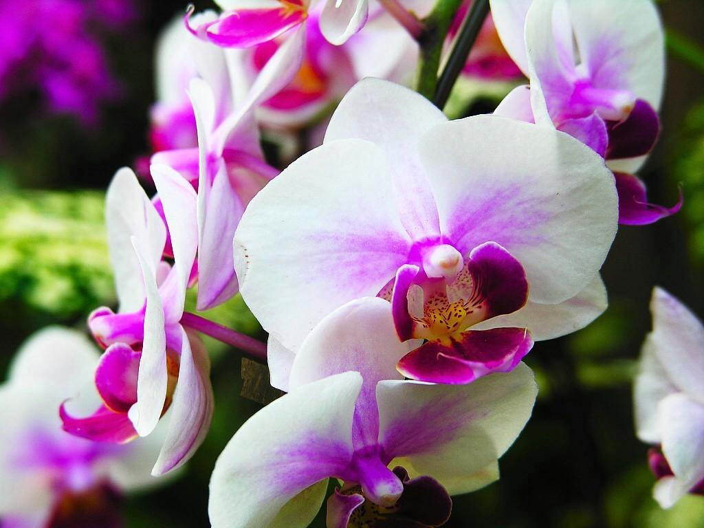 Орхидеи–особенности выращивания, типы и условия правильного ухода
