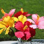 Цветы своими руками из гофрированной бумаги. миниатюра