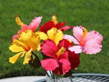 Цветы своими руками из гофрированной бумаги.