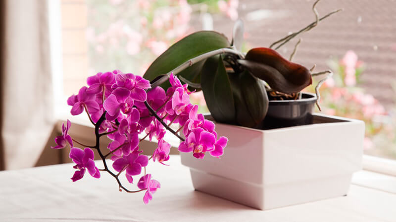 как правильно ухаживать за орхидеей дома
