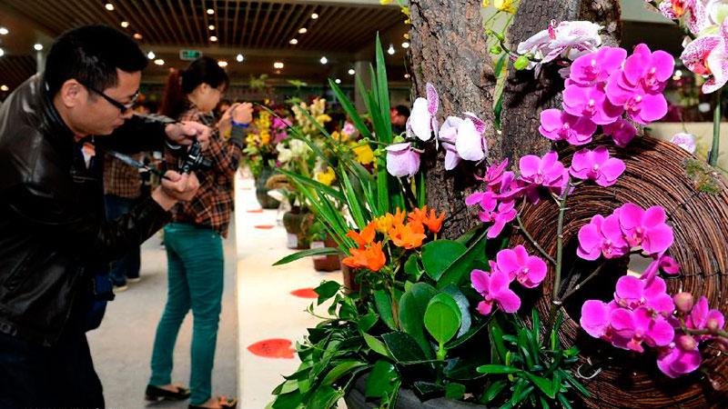 орхидея в китае