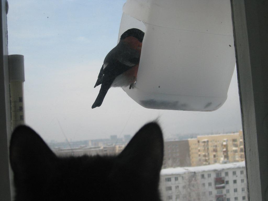 куда повесить кормушку для птиц