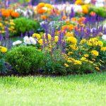 Многолетники, цветущие все лето. миниатюра