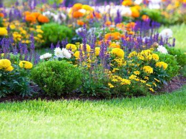 Многолетники, цветущие все лето.