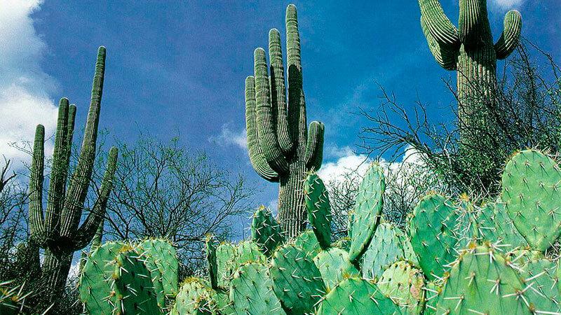 среда обитания кактуса