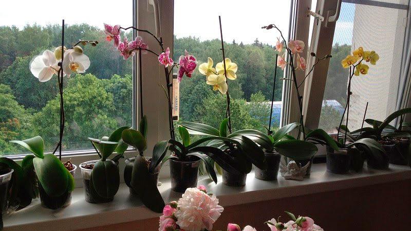орхидея на балконе
