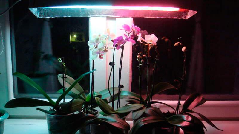 правильное освещение орхидеи