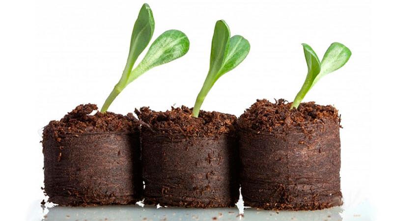 выращивание рассады в торфяных таблетках