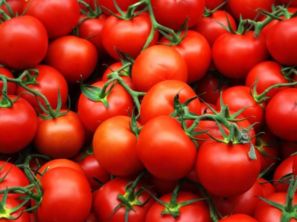 Ранние урожайные сорта томатов для открытого грунта