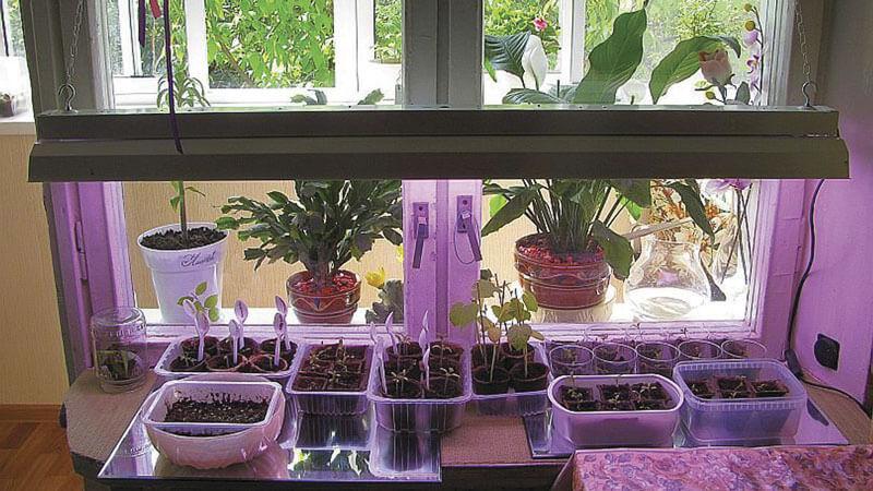 выращивание огурцов на окне зимой