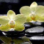 Почему желтеют листья у орхидеи? Болезни и их лечение. миниатюра