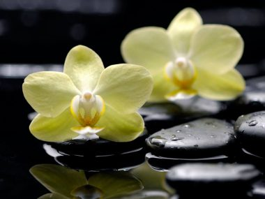 Почему желтеют листья у орхидеи? Болезни и их лечение.