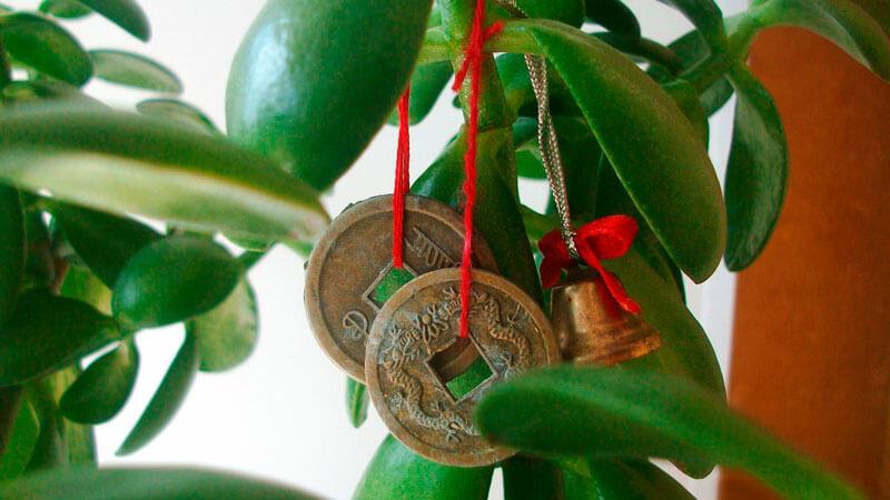 приметы и суеверия по денежному дереву