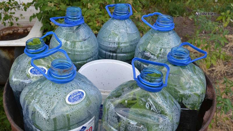 выращивание огурцоы в бутылках