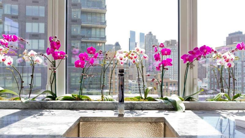 как рассадить орхидею