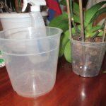 Как пересадить орхидею в домашних условиях? миниатюра