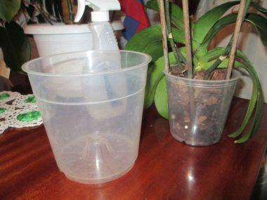 Как пересадить орхидею в домашних условиях?