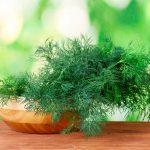 Укроп на подоконнике: выращивание из семян. миниатюра