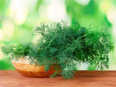 Укроп на подоконнике: выращивание из семян.