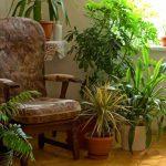 Неприхотливые и тенелюбивые комнатные растения. миниатюра