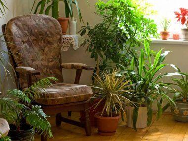 Неприхотливые и тенелюбивые комнатные растения.