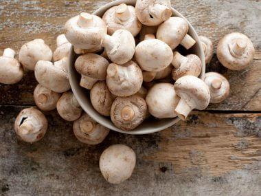 Выращивание грибов в домашних условиях.